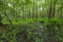 Mecklenburger Wald