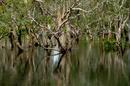 Sumpfwald Austalien