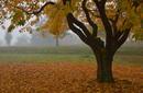 Obstbaumwiese im Herbst