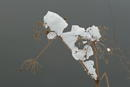 Zweig mit Schnee