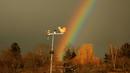 Regenbogenhahn