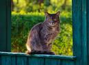 Katze von Hohengehren