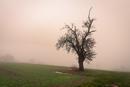 Nebel mit Saharastaub