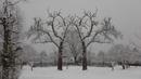 symmetrischer Baum