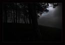 Heimat - Wenn der Nebel sich lichtet