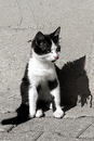 Schattenspiel - Katzentraeume