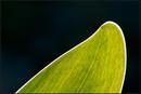 Blatt-Grün