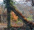Herbstliches Dreieck