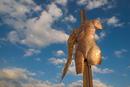 Kunstpfad Ziegelhütte- Himmelstrebend und doch Unvollkommen
