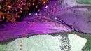 lila mit rot
