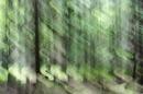 Lichtervorhang im Wald