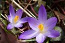 Blüte im Jannuar