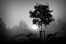 nebliger Sonnenaufgang in schwarz-weiß