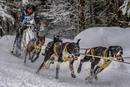 Hundeschittenrennen in Bernau