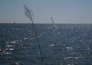 Föhr-Boot vor Langeneß