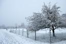 Winter in Baltmannsweiler