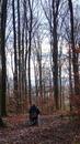 Abschied im Friedwald