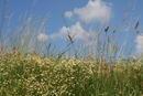 Schöne Sommerwiese