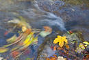 Buntes Herbsttreiben-