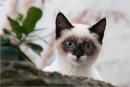 Wer ist neugieriger - Fotograf oder Katze
