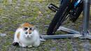 Katze mit Fahrrad