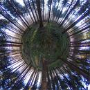 Kleiner Waldplanet