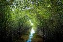 Mangrovenwald in den Everglades