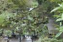 Barney Castle Park