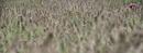 Farbtupfer im Gras